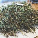Маковая соломка — доступный и очень страшный наркотик